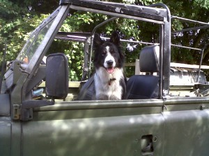 Series 3 Land Rover and dog!